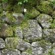 1222 「駿府城跡の残暑」