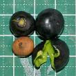 偶にはビタミンC?:オーストンオオアカゲラの雛の餌はタブノキの実