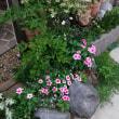 真昼の小さな庭