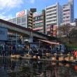 市ヶ谷うきみ会(鯉釣り) 2017年11月度例会
