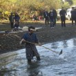 伝統漁具でサケ捕獲