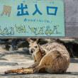 2018 ひびき動物ワールドのカンガール 2(日常の穏やかさとは違い血をみることも) 《北九州市若松区響灘緑地》