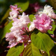 晩春から初夏へ、東山植物園 ・・・ 名古屋市