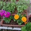 母があげたお花と、母が育てているお花たち♪