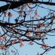 公園のバラの冬剪定&湘南蚤の市