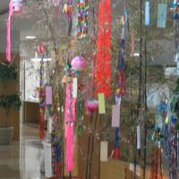 竹に短冊七夕祭り・・・その後! 2011/07/08