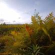 ウトナイ湖の裏側・美々川、白鳥湖⇒支笏湖丸山林道:9月17日2017