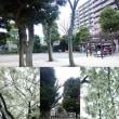 週末のイベント☆諏訪公園の桜♪