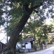 コナラ(小楢)
