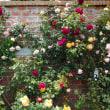バラとハーブ園 その12
