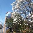 カタクリの花・コブシ・ミモザ・白蓮