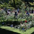 旧古河庭園バラフェスティバル・・6