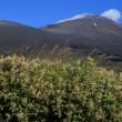 富士山 深夜の1750m高原台地から朝彩を仰ぐ...