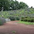 しらさぎ公園 ラベンダー山
