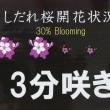 六義園枝垂れ桜2019(3)