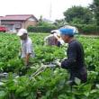 2008大豆大作戦 消毒のお手伝い募集!