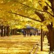国営昭和記念公園2017年初冬・・イチョウ黄葉