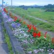 ロードに咲く花