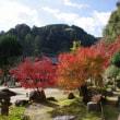 岩国、永興寺の紅葉 2017