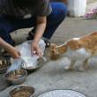 餌やりさん、猫は必ず捕獲・手術をして下さい!
