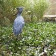 池で遊ぶアサラト(消音)