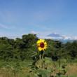 篠窪(しのくぼ)より 梅雨晴れの富士山を楽しむ (2018/6/19)