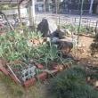 干し柿作りを始めました!