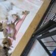 新米ママの育児奮闘記ー生後13日目ー