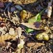 春色の花々(赤塚植物園)