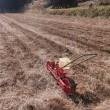 小麦種まき(2回目)