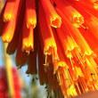秋咲きトリトマ - デンパーク(愛知・安城)