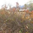 11月20日(月)今日の常念岳&浅間山&蓼科山