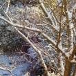一年に一回だけの積雪