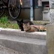 戻ってくるツンデレ猫。