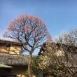荻窪の春は、、、