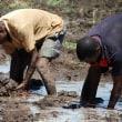 ザンベジアは作付け期2