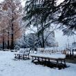 冬突入、雪が積もったよっ!