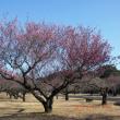春だよん!