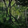 林間・沼景