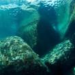 屋久島のサンゴたち