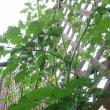トマトジャングル