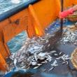 世界的に捕獲された魚の10%が捨てられている (1)