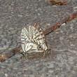 アゲハチョウと縁深き日!