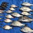 数釣りシーズン到来⁈