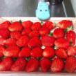 イチゴの幸せ