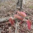赤い芽、その後