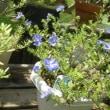 我が家の花達9月P2