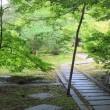 大智寺へ彼岸花を見に行ってきました