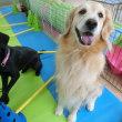 幼稚園体験にきてくれた【クルミちゃん】&【リオンくん】(*^-^*)  犬のしつけ教室@アロハドギー
