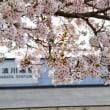 昼休みの桜撮り 第3弾
